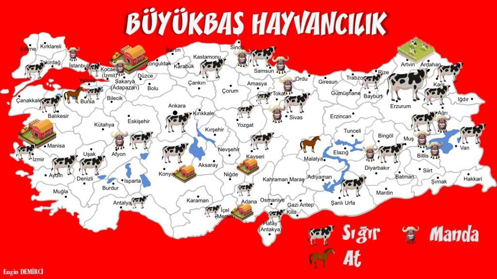 büyükbaş hayvancılık haritası